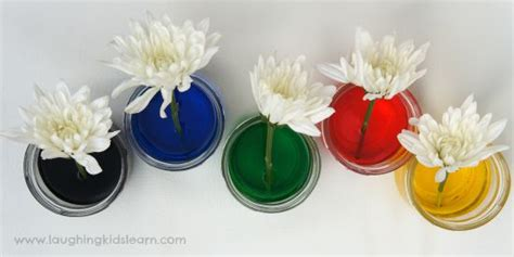 science experiment with colour changing flowers laughing