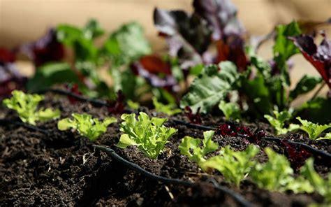 Gardening Organic Organic Gardening Advantages The Garden Glove