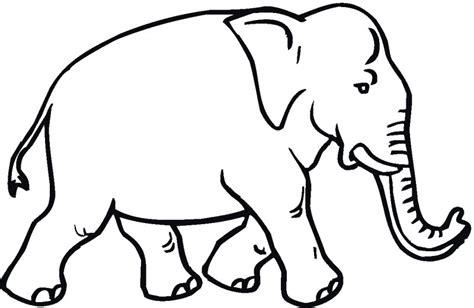 imagenes para colorear elefante dibujos de elefantes para colorear y pintar