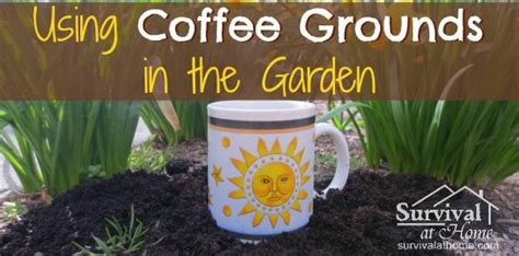Coffee Grounds In The Garden by How To Using Coffee Grounds In The Garden