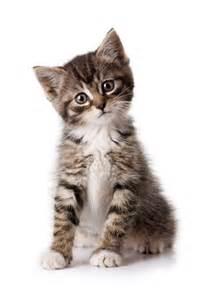 chat recettes astuces et rem 232 des de grand m 232 re