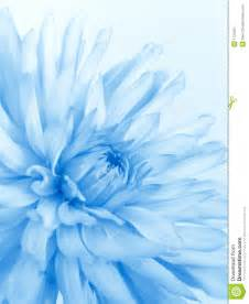 what element is grayish blue and soft soft blue flower royalty free stock photography image 1723107