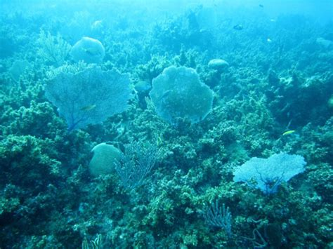 Imagenes De Algas Verdes Y Azules   indagando la biologia procariotas bacterias algas
