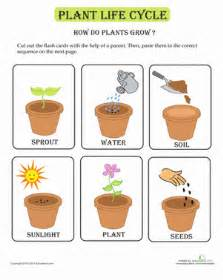 plant life cycle flash cards worksheet education com