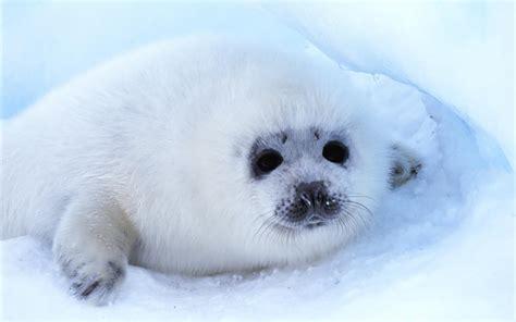 sea dogs sea baby 6915819