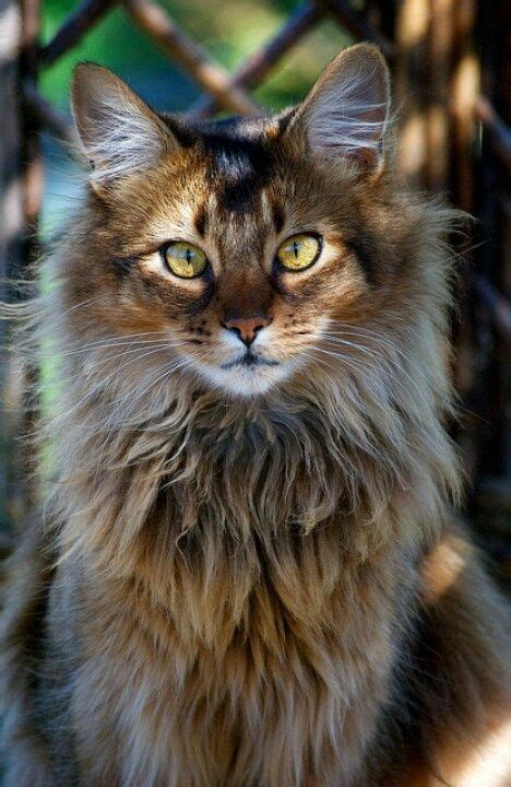 8 Cool Breeds by Cool Looking Cat Breeds Www Pixshark Images