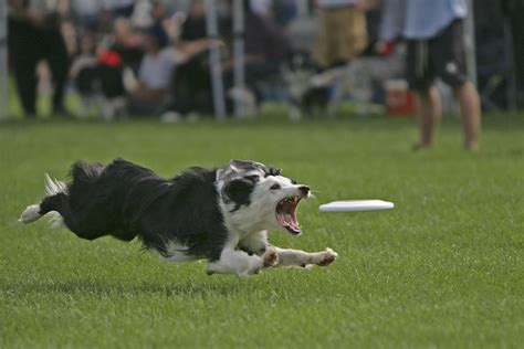 best frisbee image gallery disc