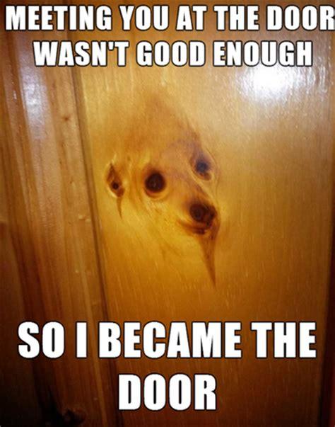 Orange Dog Meme - 10 funniest dog and cat memes animal hearted animal