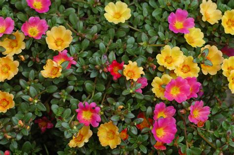 high heat plants 10 most beautiful flowers to grow in hanging basket