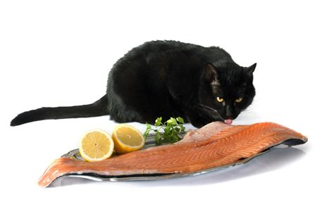 can dogs eat salmon can cats eat salmon tips