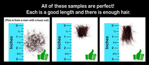 1 inch of hair how to cut a hair sle for analysis moses nutrition
