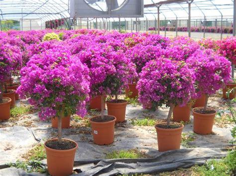 piante e fiori da giardino perenni piante da terrazzo perenni piante perenni da interno e