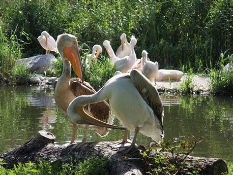 Zoologischer Garten Magdeburg Zooallee Magdeburg zoo magdeburg touristische informationen 252 ber magdeburg