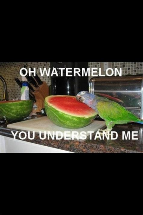 you understand me oh watermelon you understand me by lightshadow93 on