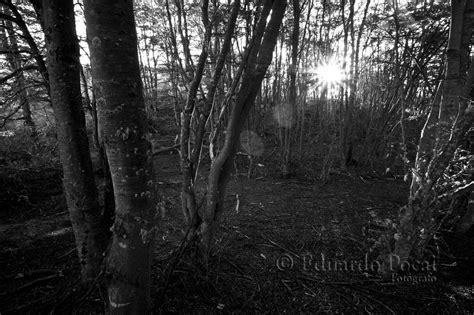 imagenes goticas blanco y negro fot 243 grafo profesional eduardo pocai portfolio y blog