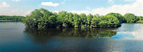 imagenes de barreras naturales manglares barreras ante el cambio clim 225 tico planeta