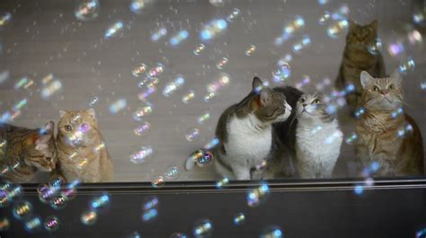 and cats 10 cats and soap bubbles with cats