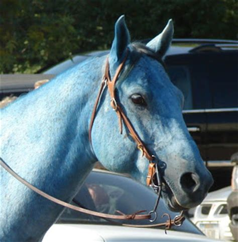 T 46 Blue Pony marnell s meanderings blue ponies