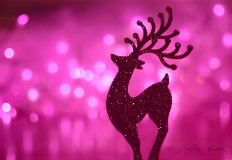merry  pink christmas  pretty pin flickr