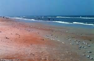 shrimp boat wreck ormond beach ormond beach sunbathers horror as thousands of dead fish