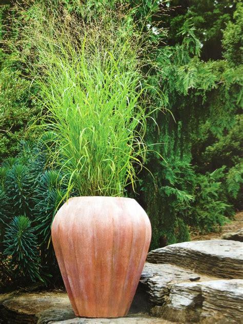 potted ornamental grass ornamental grasses pinterest