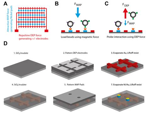 bead arrays biomolecular tweezers facilitate study of mechanical