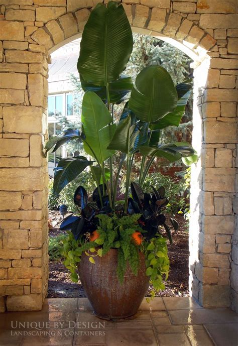Tropical Planter Ideas by Tropical Planter Unique By Design L Helen Weis