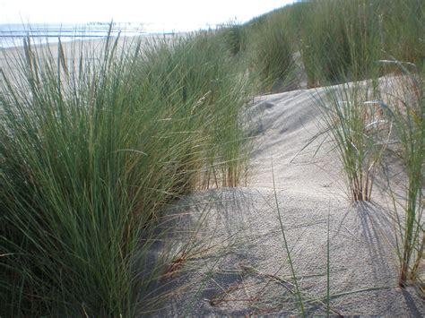 größte bank deutschland kostenlose foto strand gras sand pflanze rasen