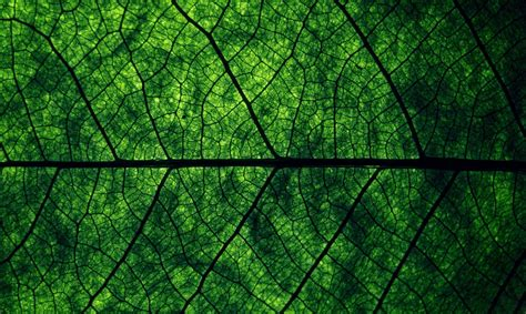 green wallpaper with leaf pattern nature leaves background fifteen photo texture