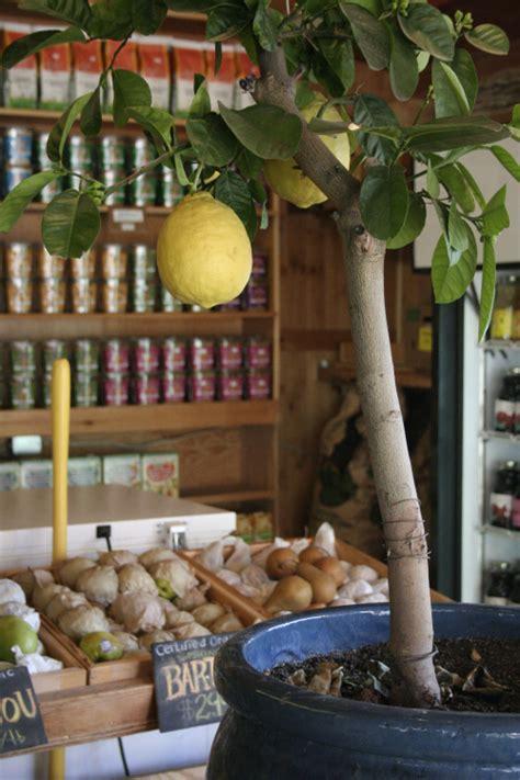 grow   lemon tree   store bought lemons