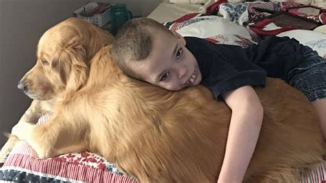 seizures in golden retrievers guardian in disguise golden retriever detects boy s seizures before they happen