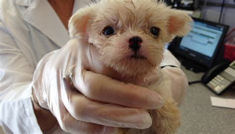 puppy mills in colorado 60 animals rescued from hendry co puppy mill wink news