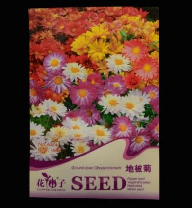 Bibit Biji Benih Seeds Bunga Kamboja Kuning Putih jual bibit benih krisan penutup tanah ground cover chrysanthemum