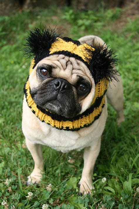 pug bee costume bumble bee hat pug hat bumble bee costume cozy clothes handmade gift