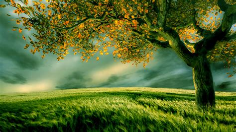 wallpaper green tree hd hd images hd pictures backgrounds desktop wallpapers