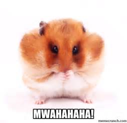 Hamster Meme - govt to require citizens to stockpile food water