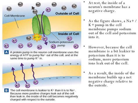 biology biology