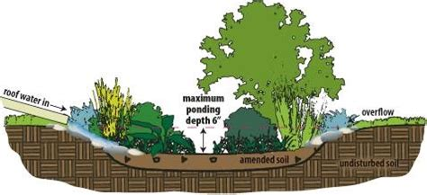rain garden cross section rain gardens reduce your stormwater