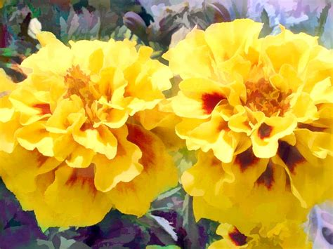 marigold paint sunny yellow marigolds painting by elaine plesser