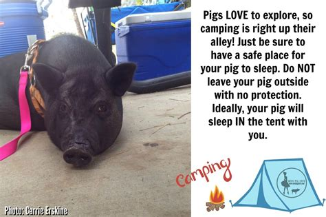 how to raise pigs in your backyard how to raise pigs in your backyard 28 images how to