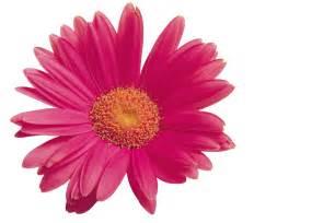 images of flowers flower hdwplan