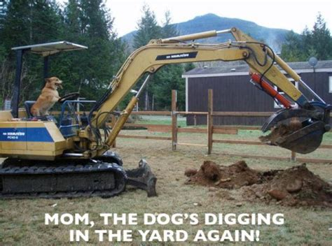 Heavy Equipment Memes - bad dog bad construction equipment operating dog funny