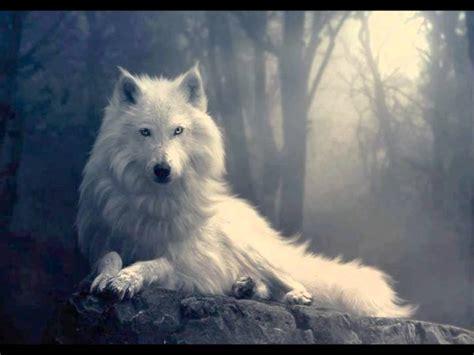 imagenes terrorificas de lobos imagenes de lobos buscar con google canis lupus arctos