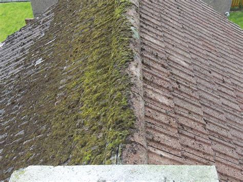 on roof roof moss removal property cleaning maintenance