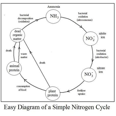 simple water diagram simple nitrogen cycle diagram simple free engine image