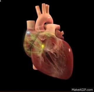 sistema de conducción corazón on make a gif