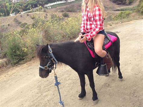 pony rides los angeles farm friendz
