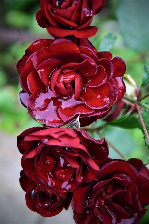 images flower romance background beautiful