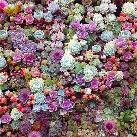 succulent plant best 25 succulent wall ideas on succulent
