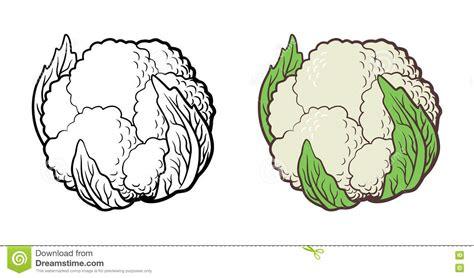 Cauliflower Illustration Stock Vector   Image: 73242189